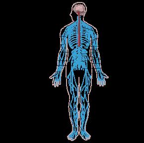 képek az emberi test parazitáiról