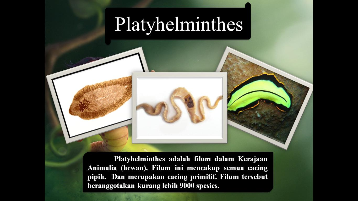 Platyhelminthes cacing. ppt)