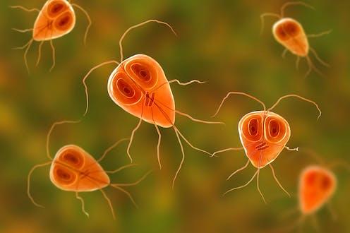 Emésztőrendszeri helminth fertőzések
