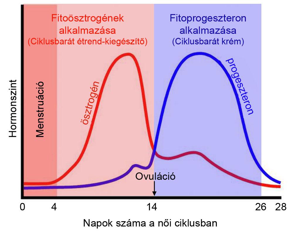 kiegészítők ösztrogén méregtelenítés)