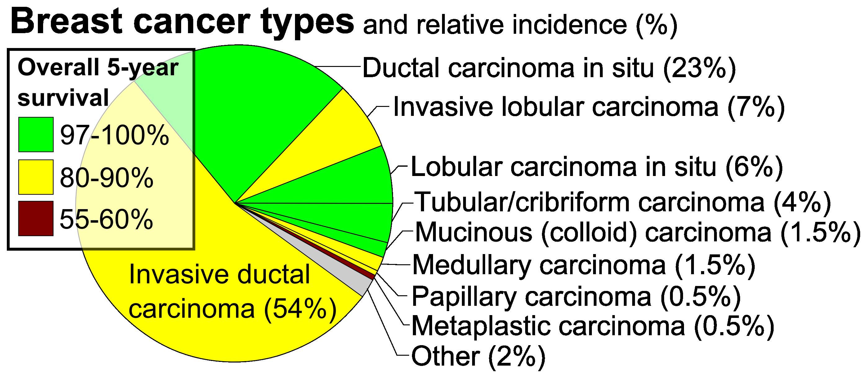 Class Flukes (szerkezet, reprodukció, életciklus). Class Flukes (trematodes)