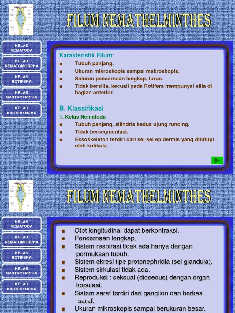 filum nemathelminthes ppt)