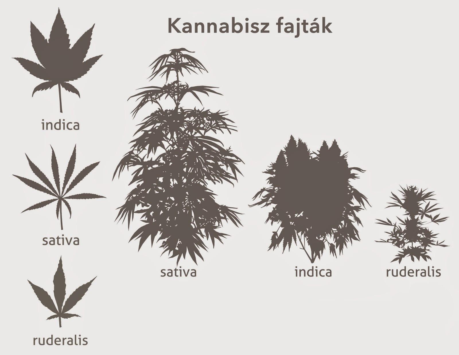 marihuána méregtelenítés kiegészítők