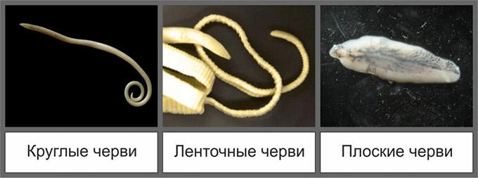 az aszcariasis és az enterobiosis a különbség)