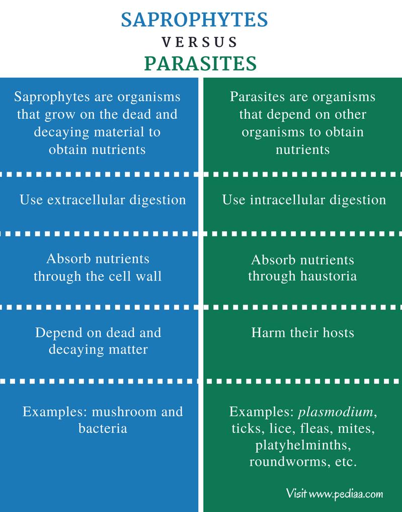 A szaprofiták és a paraziták közötti különbség - A Különbség Köztük