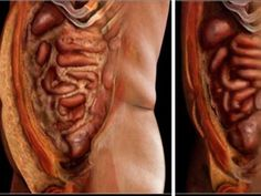 pinworms életmód