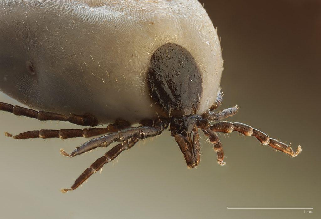 malária parazita gazdaszervezete)