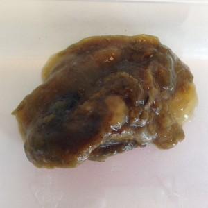 Giardia parasiet mens,