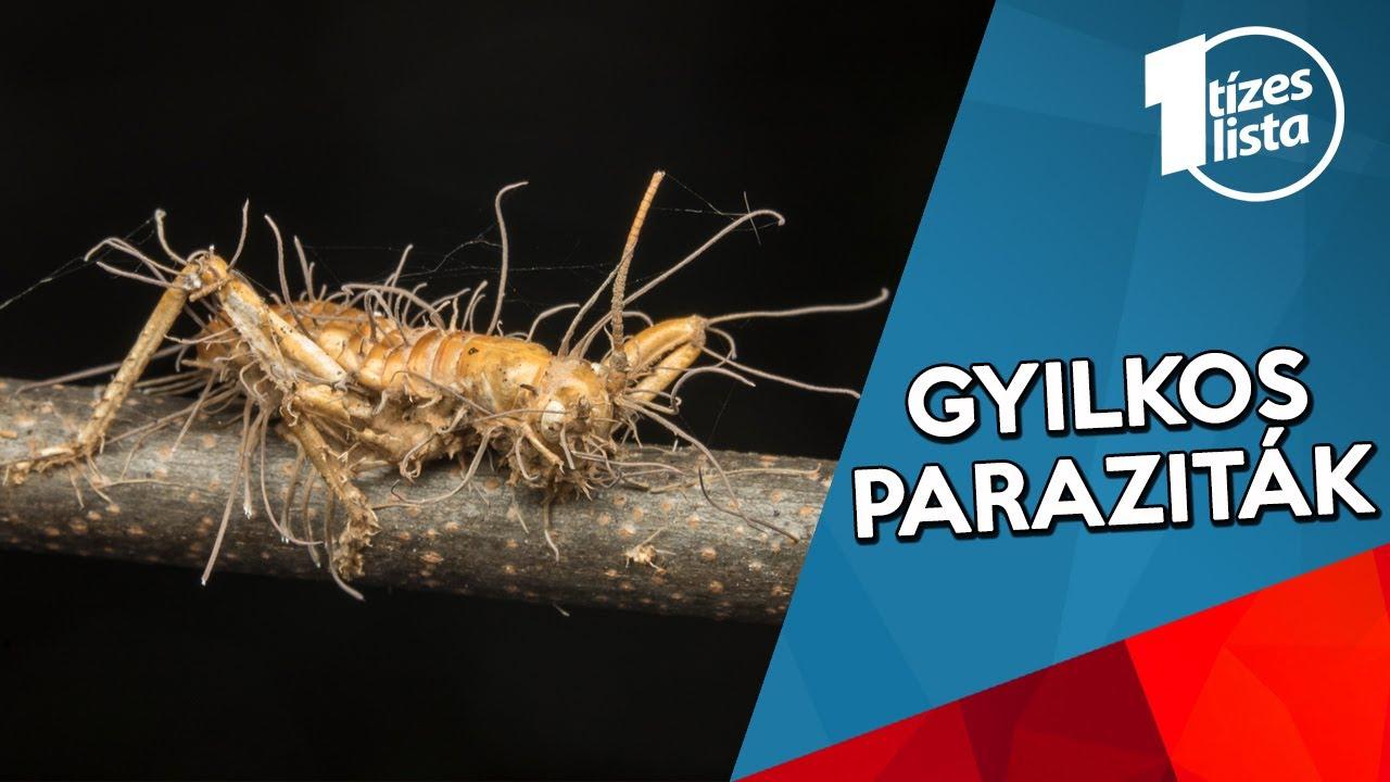 paraziták a természetben)