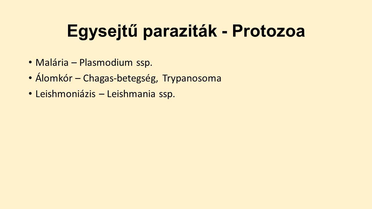 protozoan paraziták az emberben