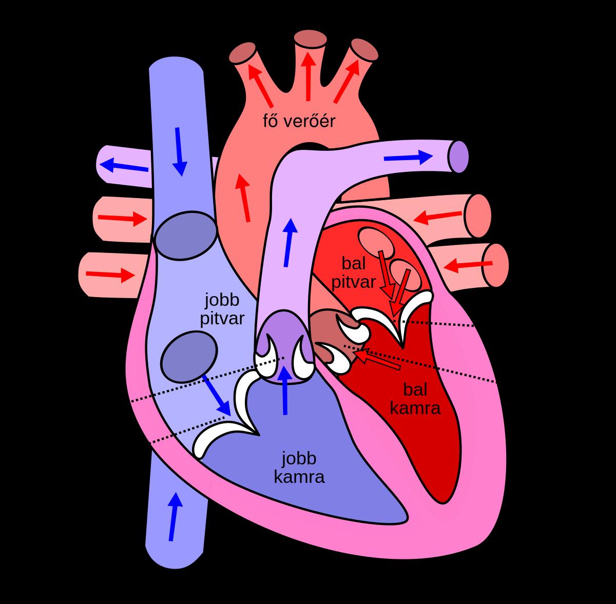 tüdő alveococcosis kóros anatómia)