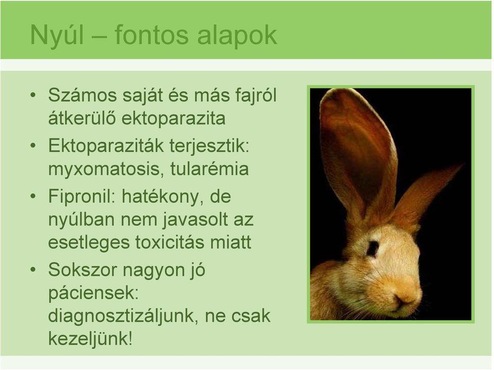 ektoparaziták nagy állatokban)