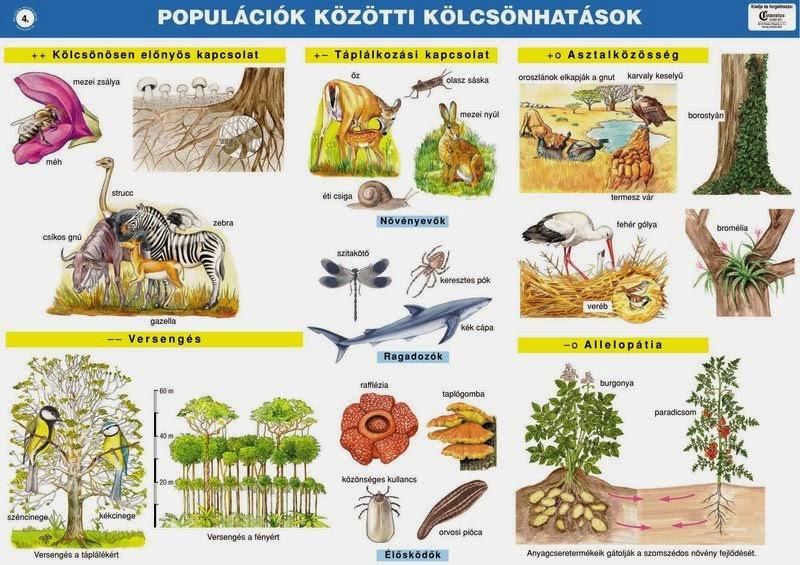 A ragadozók és az élősködők közötti különbségek