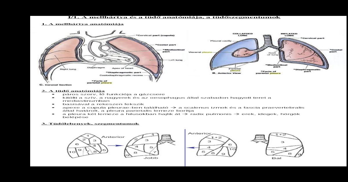 diphyllobothriasis diagnosztizálása és kezelése)