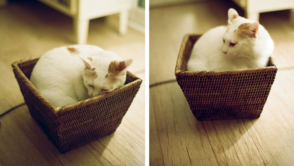mint kihozni férgeket macskának)
