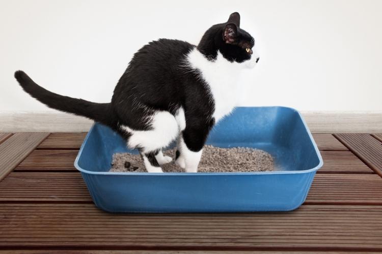 bélféreg tünetei macskáknál