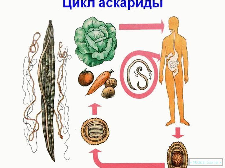 anthelmintikus baba)