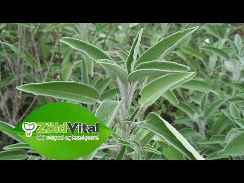gyógynövény kerekes féregből és férgekből)