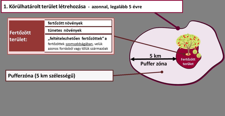 ankilostomiasissal történő fertőzés módszerei)