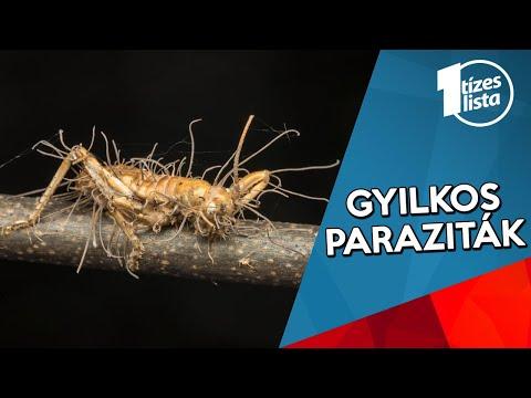 hamu- parazita kezelés