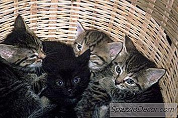 giardia behandling katt