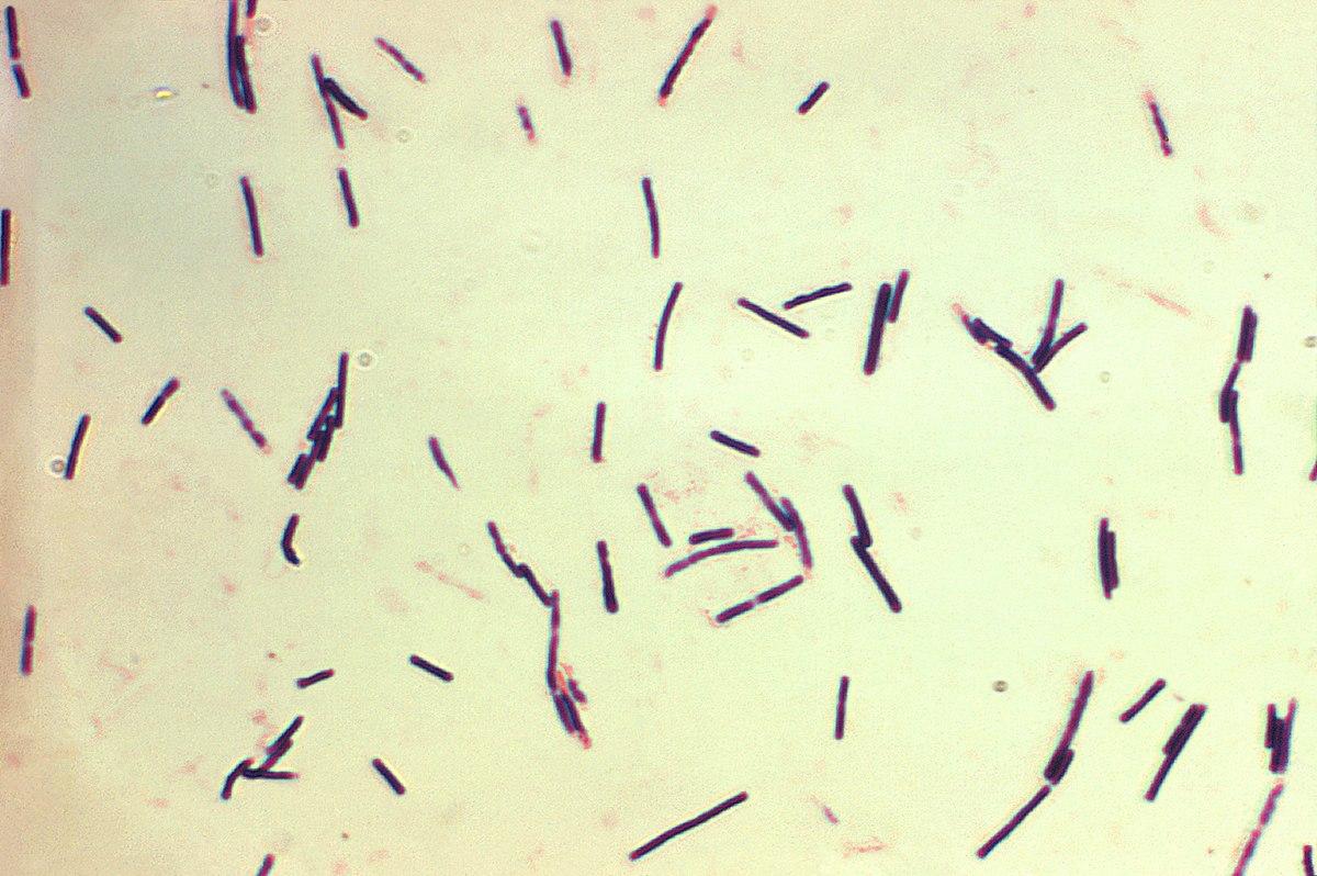 enterobiosis kenet, ahonnan)