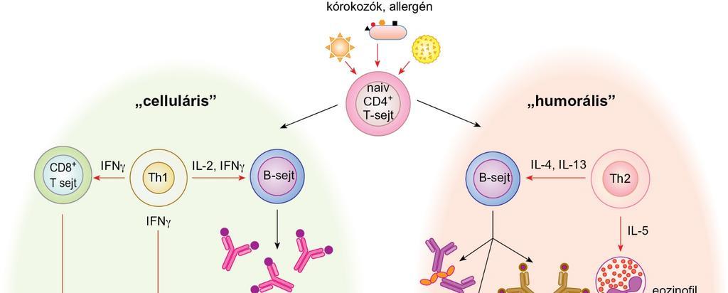 Először azonosítottak parazita daganatos sejtjei által okozott rákos megbetegedést embernél