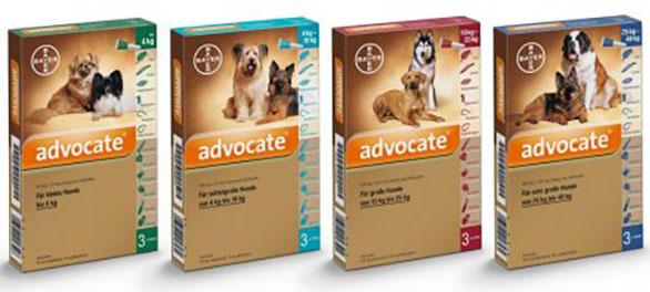 Kutya pároztatás, vemhesség, ellés és a kiskutyák gondozása