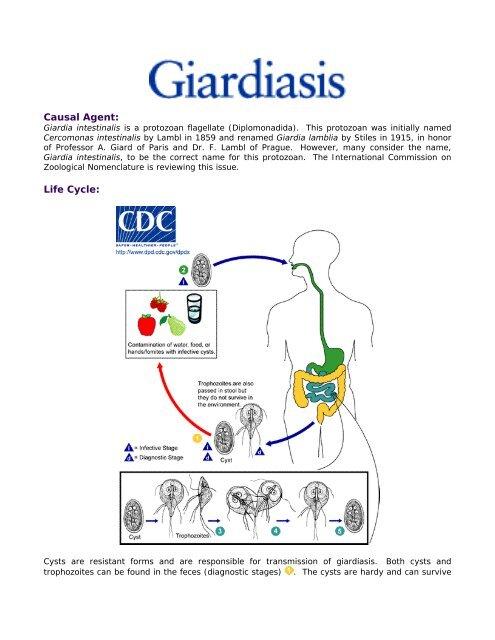 giardia cdc life cycle)