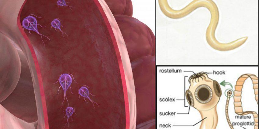 giardia simptome
