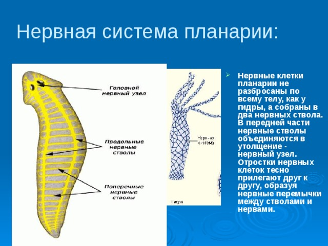 a férgek fajtáinak jellemzői)