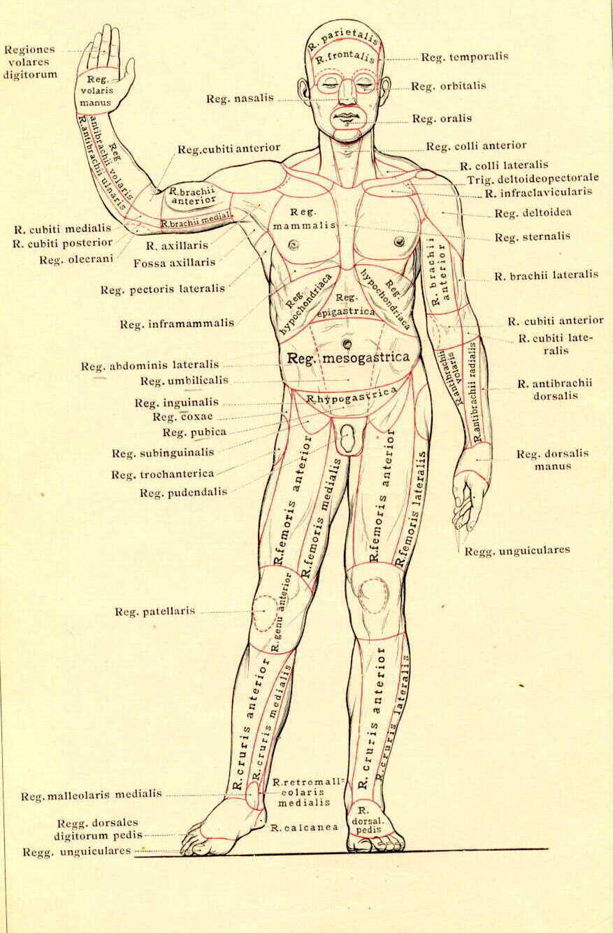 Az emberi test elképesztő működése