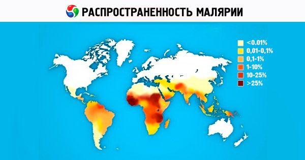 A malária kezelése egyszerű és érthető. A malária patogenezise és klinikai megnyilvánulásai
