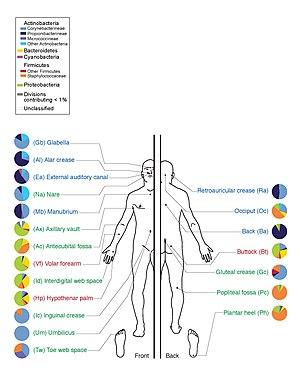 mi a baktérium összetétele
