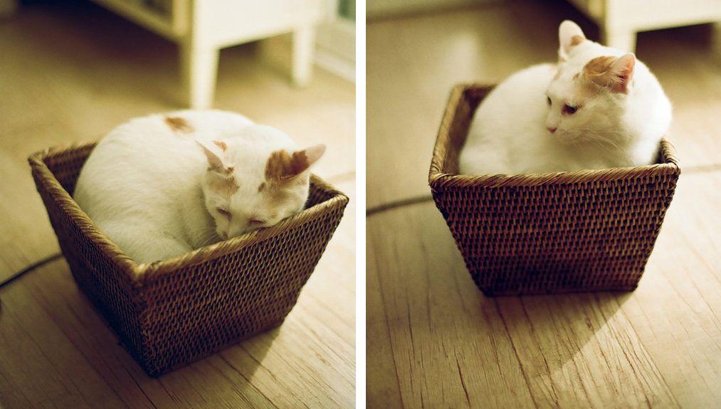 Nacume Szószeki: Macska vagyok