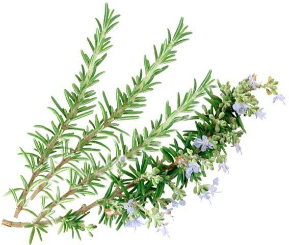 choleretic gyógynövények giardiasishoz)