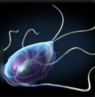 radiolabor horogférgek paraziták