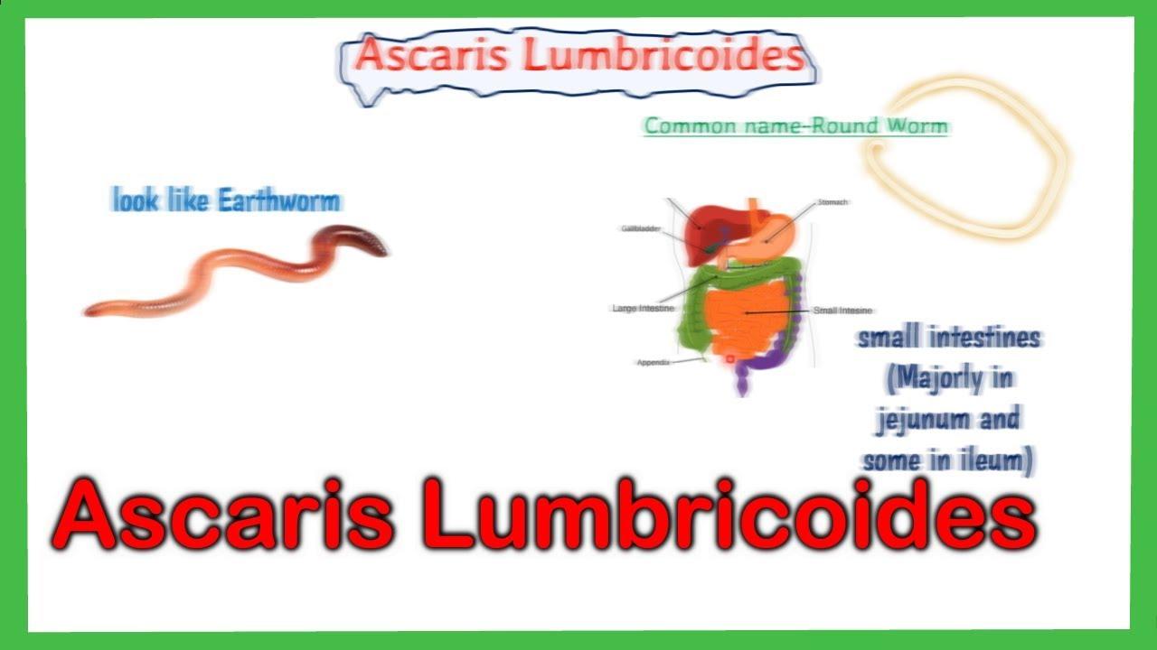 enterobiasis inkubációs periódus a torokfájásról
