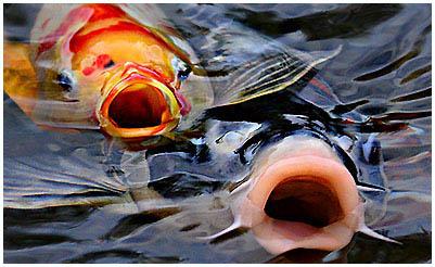 A hal egy élősködő emberben él