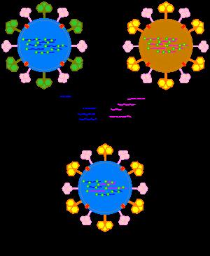 mi az ellenanyagok szerepe a helmintiasisban