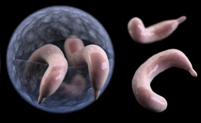 pinworm giardia