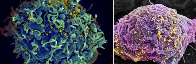 protozoan emberi paraziták kezelése rossz leheletű fórum, aki megszabadult