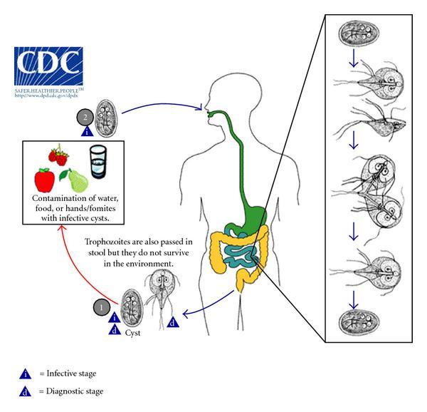 giardiasis feladat