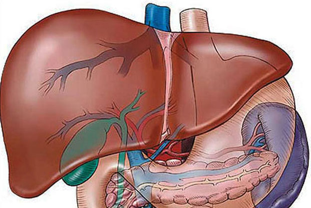 hatekony gyogyszer az emberi test parazitaira