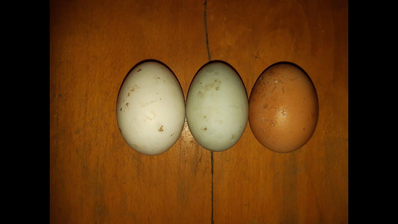 A helminták és a tojásféreg ugyanaz