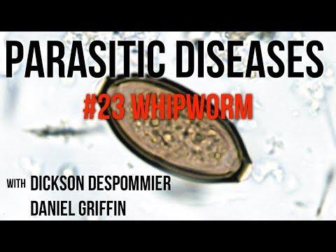 trichocephalosis járványtani jellemzői)