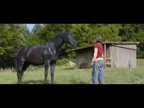 Equimax - A megfelelő gyógyszer ló parazitás fertőzöttségének átfogó kezelésére