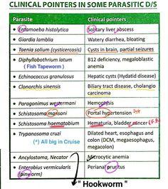 Pinworms kezelési rend. Pinworm kezelés gyermekek gyógyszeres kezelési rendje