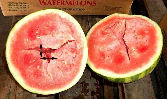 görögdinnye szájszag)