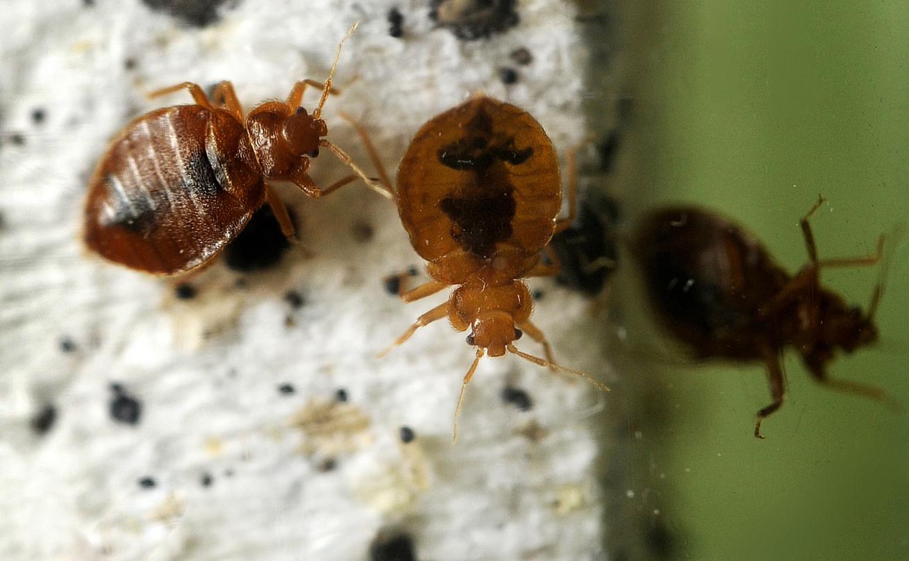paraziták jelei a testkezelésben